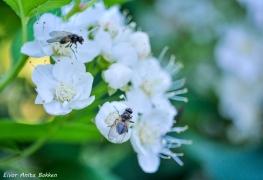 Fluer forsyner seg med nektar