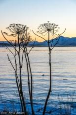 Tromsøpalmer